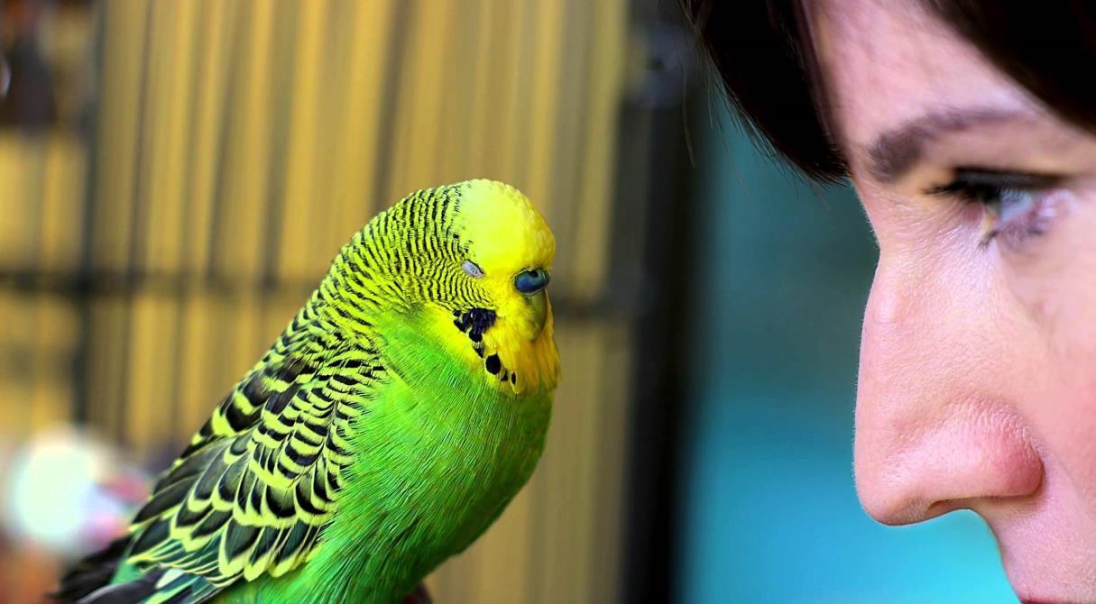 Свободу попугаям. Животных запретят «арестовывать» за долги хозяев