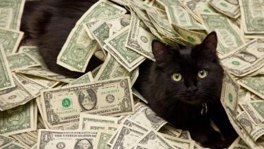 Не тронь котёнка: домашних животных запретили изымать за долги